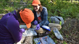 Researchers counting ticks on small mammals